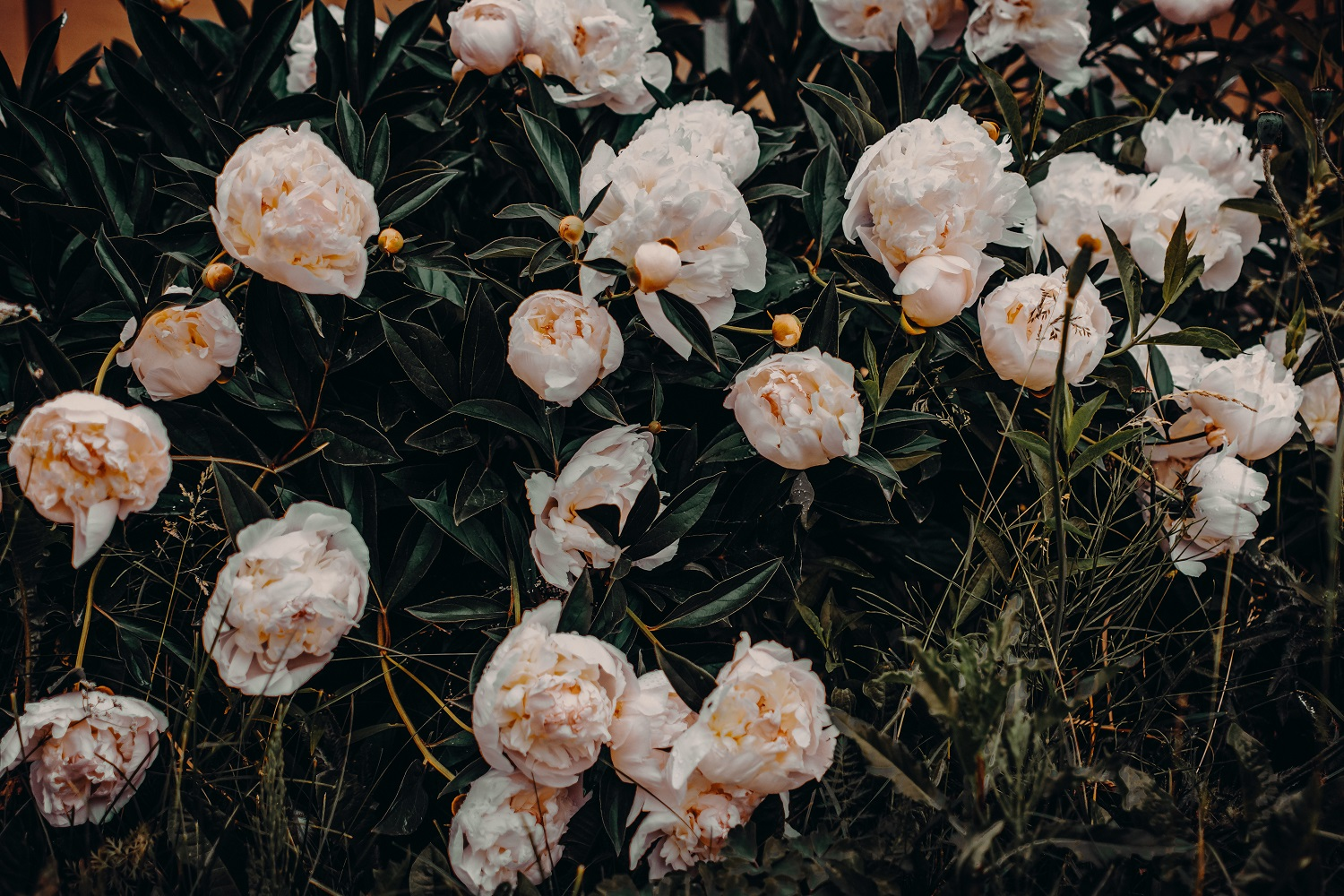 5 Expressive Colors of Flowers that Depict Different Emotions