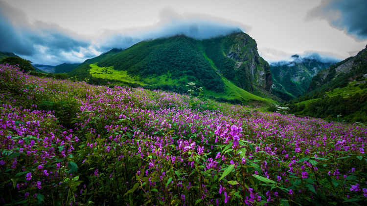Valley of Flowers - A Wonder Valley in Garhwal Himalayas