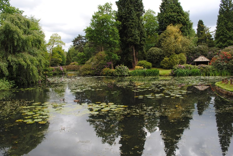 The Pros and Cons of Having a Pond on Your Property